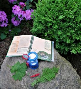 Gartenparty forschen
