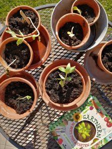 Pflanzen mi tKindrn