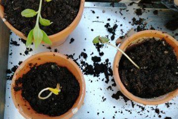 Umpflanzen